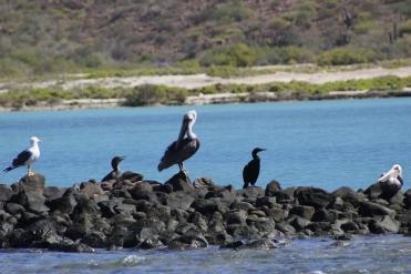 aves 2